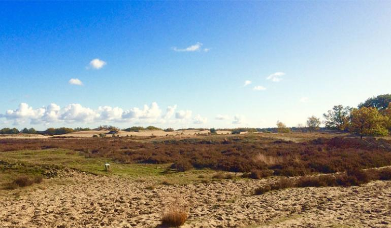 Foto Dutch Dying Desert